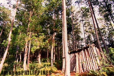 Lumber shed in the middle of the Kiltepan Forest.