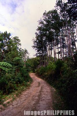 Mountain trail leading to the Kiltepan Tower.,  Place Taken: Mountain Province take on  Date Taken: 2002