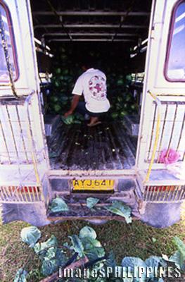 Sagada farmer preparing his crops for delivery.,  Place Taken: Mountain Province take on  Date Taken: 2002