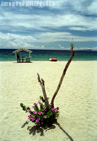 """""""A young plant at the beach in Puerto Galera"""",  Place Taken: Mindoro Oriental take on  Date Taken: 1993"""