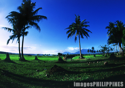 """Ricefield""