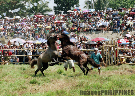 """Horse Fighting at the Kadayawan Festival""