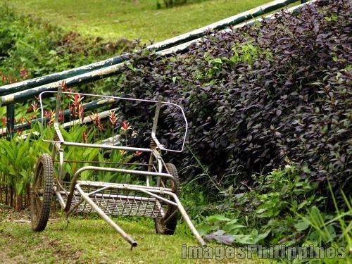 """""""Plant Transporter 2"""",  Place Taken: Cavite take on  Date Taken: 2008"""