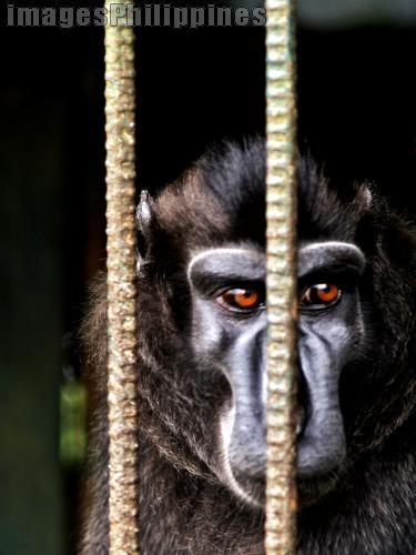 """""""Monkey Behind Bars"""",  Place Taken: Cavite take on  Date Taken: 2008"""