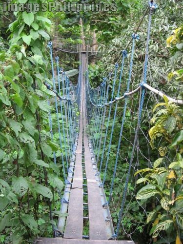 """Macahambus Nature Park: Skybridge Adventure"", 