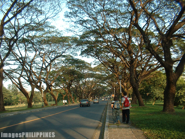 """Acacia Trees in the Academic Oval"",  Place Taken: Metro Manila take on  Date Taken: 2003"