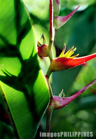 """""""Green and Red"""",  Place Taken: Lipa City, Batangas take on  Date Taken: 2001"""
