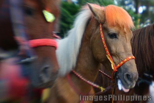 """""""Wright Park Horses"""",  Place Taken: Benguet take on  Date Taken: 2005"""