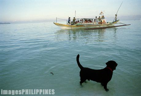 """Dog at the Beach"",  Place Taken: Boracay, Aklan take on  Date Taken:  1994"