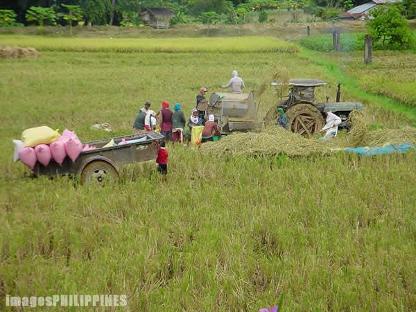 """""""Farmers�,  Place Taken: Bulacan take on  Date Taken: 2002"""