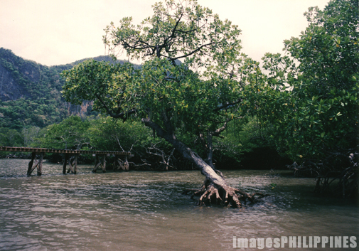 """Mangrove Trees""