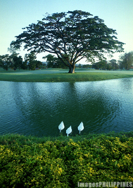 """Pond at Mimosa Golf Course""