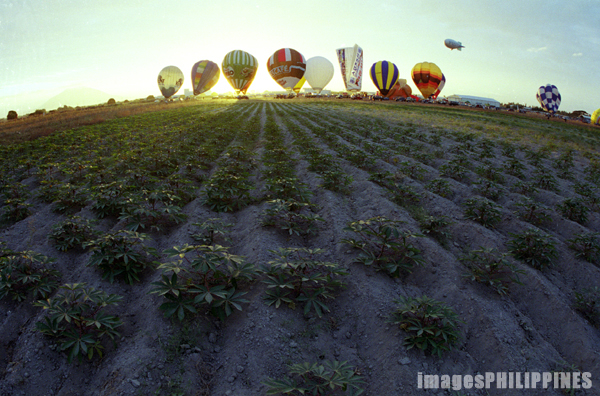 """Hot Air Balloons and the Field""