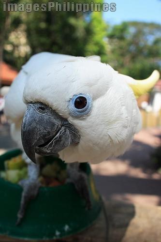 """""""Curios Loro of Manila Zoo"""",  Place Taken: Metro Manila take on  Date Taken: 2007"""