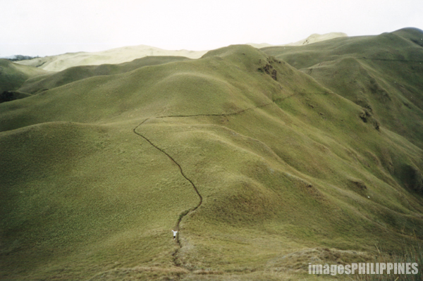 """Mt. Pulag Grassland Trail"",  Place Taken: Benguet, Mountain Province take on  Date Taken: 1999"