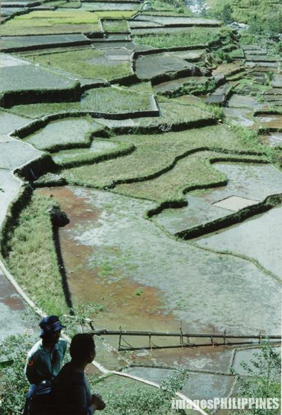 """Hapao Rice Terraces"", 