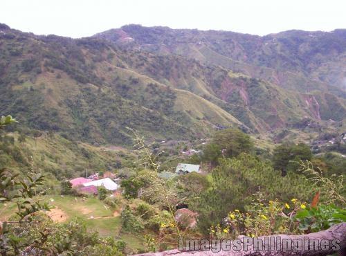 """""""All Green"""",  Place Taken : Baguio take on  Date Taken: 2007"""