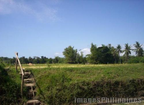 """""""Farm Back Home"""",  Place Taken: Iloilo take on  Date Taken: 2009"""