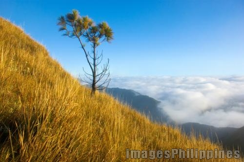 """Lone Tree"", 