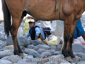 """Horse framed"", 