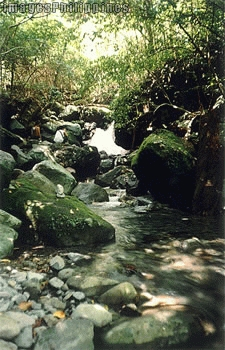 """Papaya River"", 