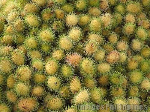 """""""Green Rambutan"""",  Place Taken: Laguna take on  Date Taken: 2004"""
