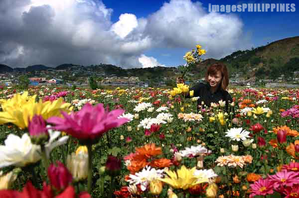 """Baguio Flowers"", 