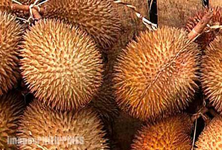 """""""Durian"""",  Place Taken: Davao take on  Date Taken: 2000"""