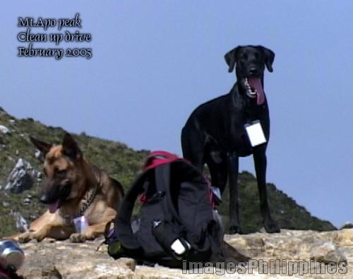 """dogs @ the peak"", 