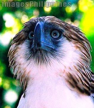 """Arnis up close"",  Place Taken: Phil. Eagle, Davao City take on  Date Taken: 2006"