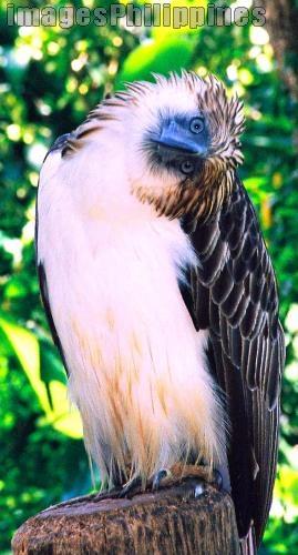 """Arnis - d eagle"",  Place Taken: Phil. Eagle, Davao City take on  Date Taken: 2006"