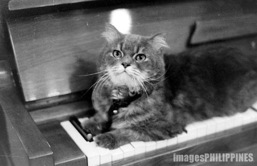 """""""Feline Symphony"""",  take on  Date Taken: 2003"""