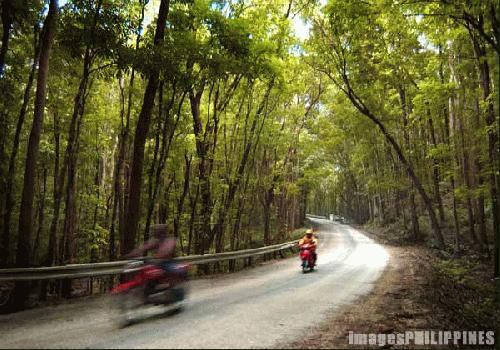 """""""Bohol Rainforest"""",  Place Taken: Bohol take on  Date Taken: 2000"""