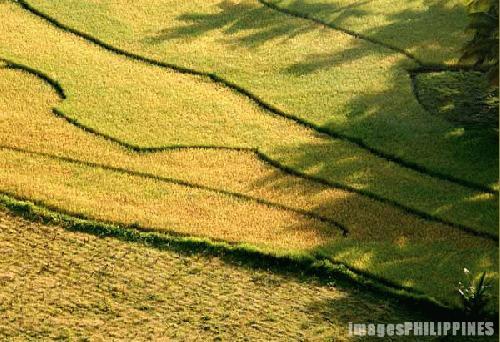 """""""Rice Paddies"""",  Place Taken: Bohol take on  Date Taken: 2002"""