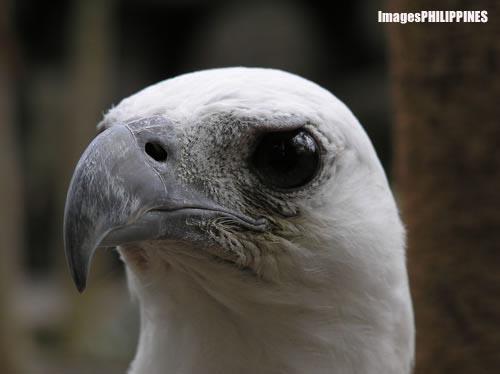 """""""Eagle's Stare"""" ,  Place Taken: Metro Manila take on  Date Taken: 2004"""
