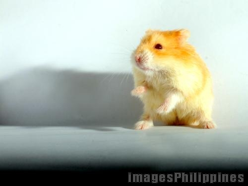 Hammie Hamster, 