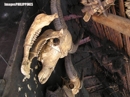 """Ifugao Skulls"" , 