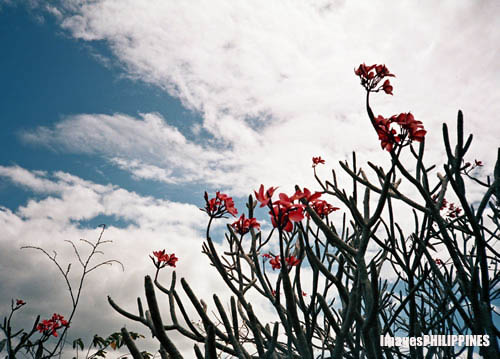 """Cielito Lindo Flowers"", 
