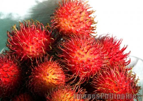 Rambutan, 