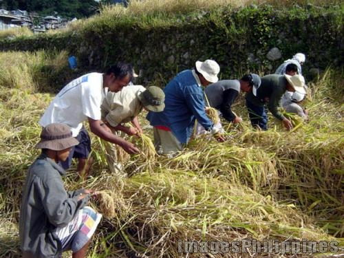 """Harvest Time in Samoki (5)"", 
