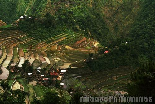 Panoramic view of rice terraces in Batad, Banaue,  Place Taken: Benguet take on  Date Taken: 1994