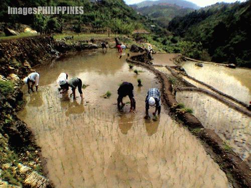 """""""Planting Season in Tupingaw"""",  Place Taken: Asin Rd. Tuba, Benguet take on  Date Taken: 2003"""