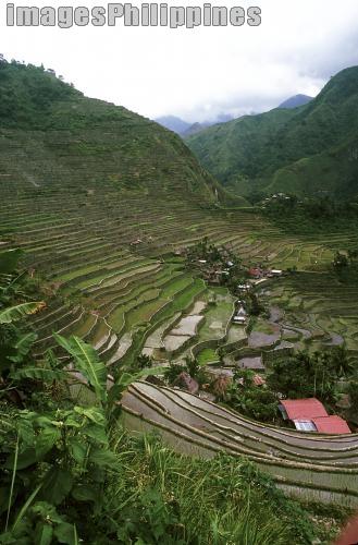 Battad Amphitheater,  Place Taken: Benguet take on  Date Taken: 1995