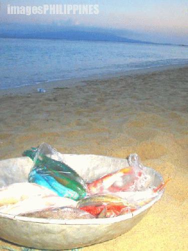 """Give FISH a chance"",  Place Taken: Puerto Galera, Mindoro Oriental take on  Date Taken: 2004"