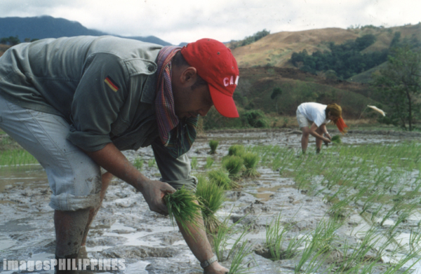 �Planting Rice in Nueva Ecija�