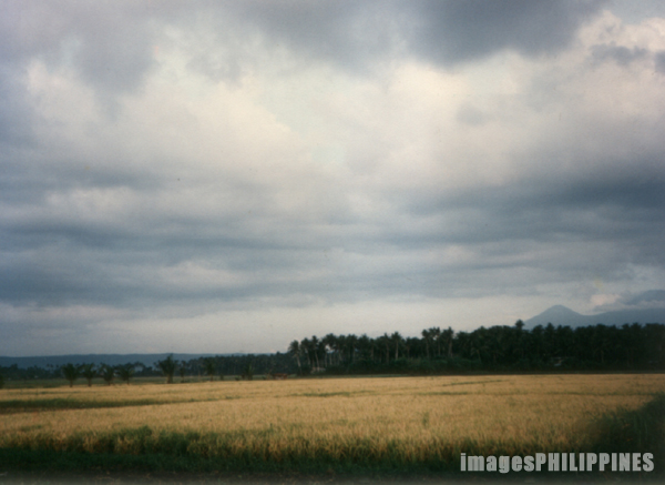 �Rice Field�