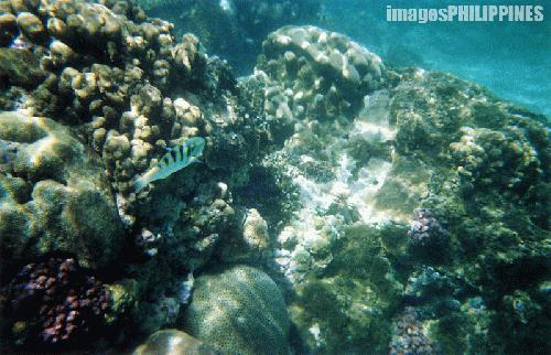 """Coral Garden"", 