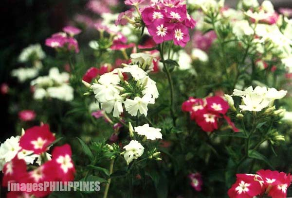 """Flowers"",  Date Taken: 2000 take on  Photographer/Artist: Joel Abelida"