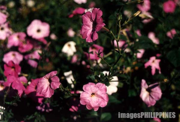 """Flowers""