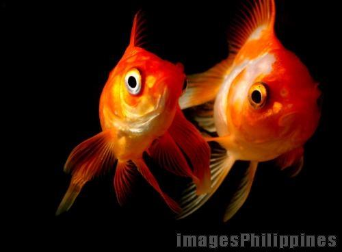 """""""Goldfish"""",  take on  Date Taken: 2009"""